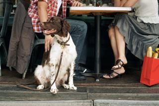 Blog Thumbnail of Arlington Dog Friendly Restaurants