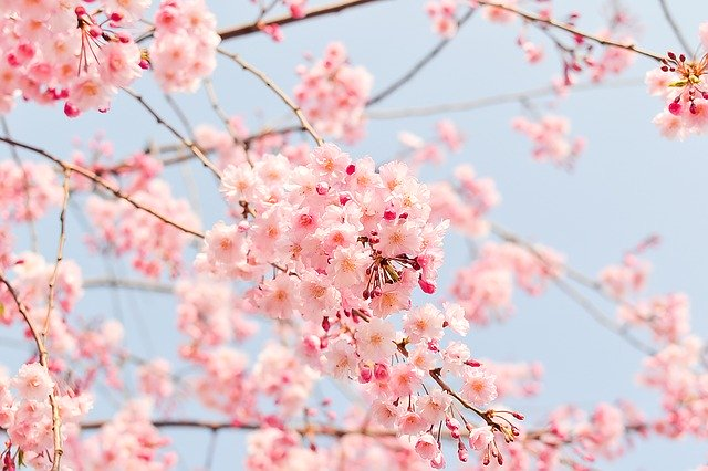 Blog Thumbnail of Fun Facts About the Spring Equinox