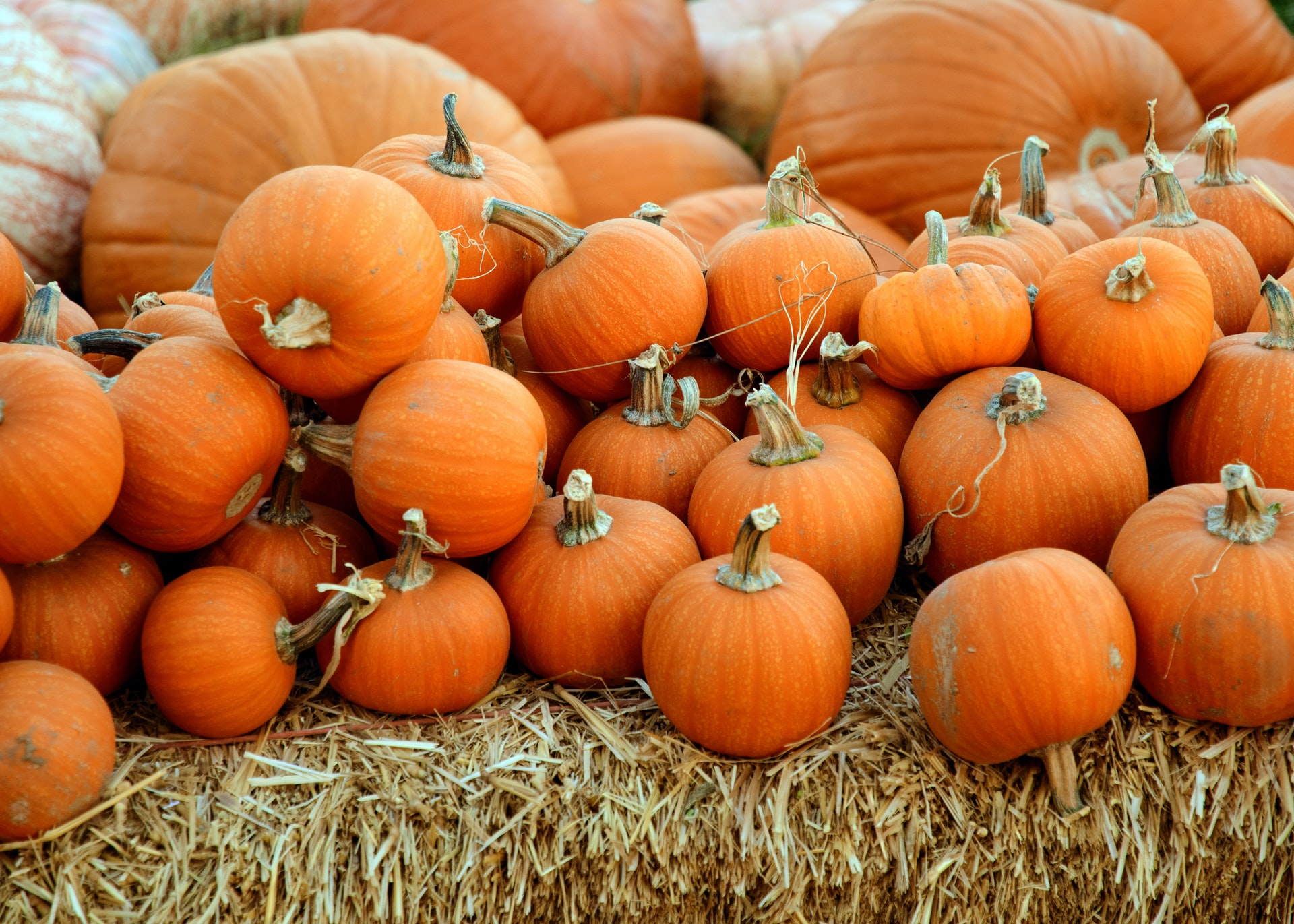 Blog Thumbnail of The Best Ways to Decorate a Pumpkin, No Carving Knife Necessary
