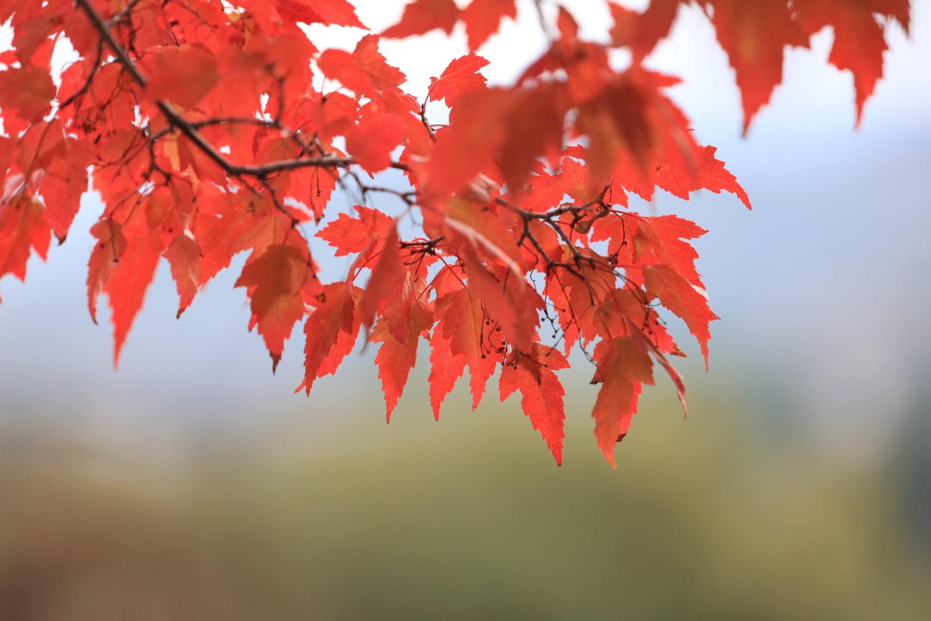 Blog Thumbnail of Enjoy the Beauty of Fall at Potomac Overlook Regional Park