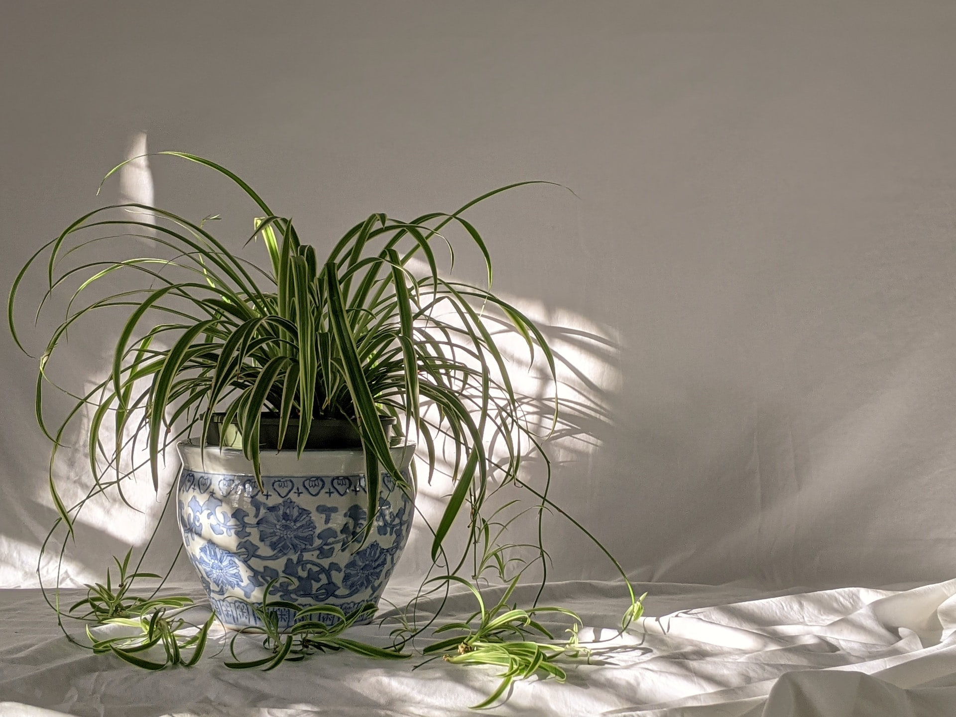 Blog Thumbnail of Apartment-Friendly Houseplants to Add to Your Must-Grow List