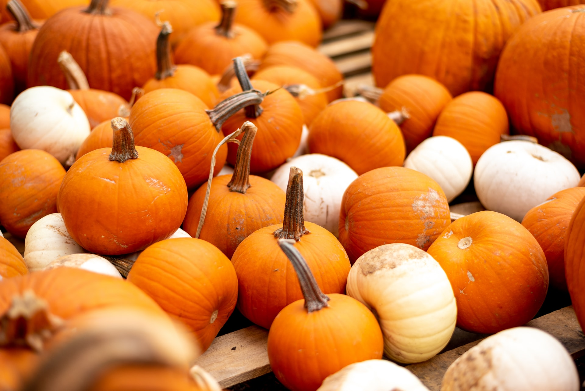 Blog Thumbnail of Clever No-Carve Ways to Decorate a Pumpkin